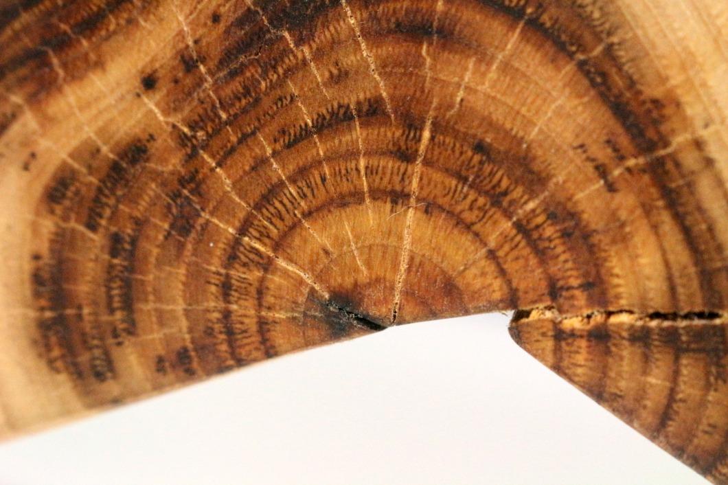 détail sculpture bois de chätaignier